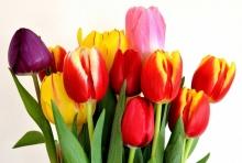 С 8 марта, милые читательницы!