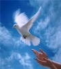 21 сентября Международный день мира!
